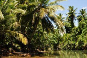 Żyć nie umierać na Dominice Biuro podróży Goforworld by Kuźniar