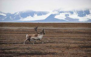 Arktyka na jeden dzień Biuro podróży Goforworld by Kuźniar