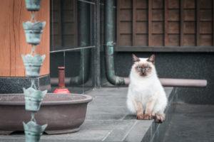 Wyspa kotów Biuro podróży Goforworld by Kuźniar