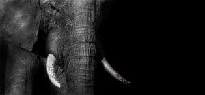 Królowa słoni Biuro podróży Goforworld by Kuźniar