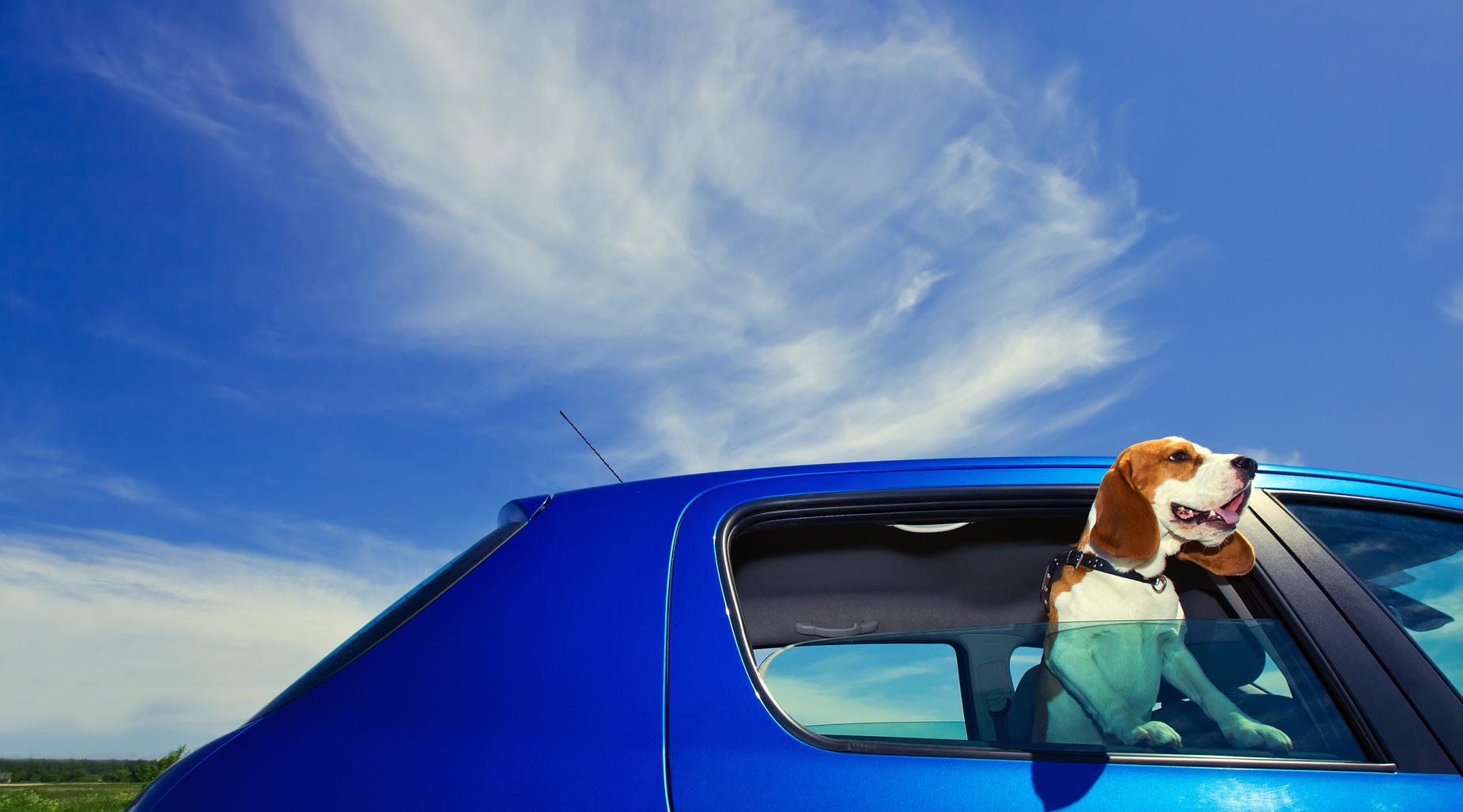 Zwierzak podróżnik Biuro podróży Goforworld by Kuźniar