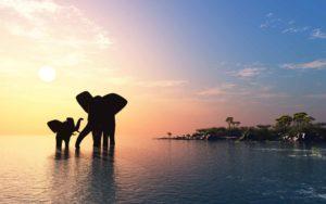Projekt słoń Biuro podróży Goforworld by Kuźniar