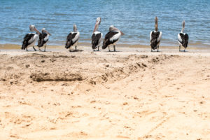 Australia: Cairns, czyli wodny raj Biuro podróży Goforworld by Kuźniar