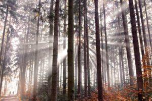 Jak oddycha las Biuro podróży Goforworld by Kuźniar