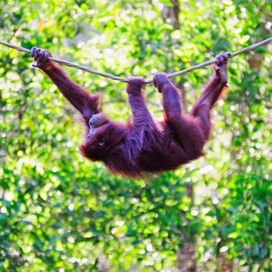Borneo Biuro podróży Goforworld by Kuźniar