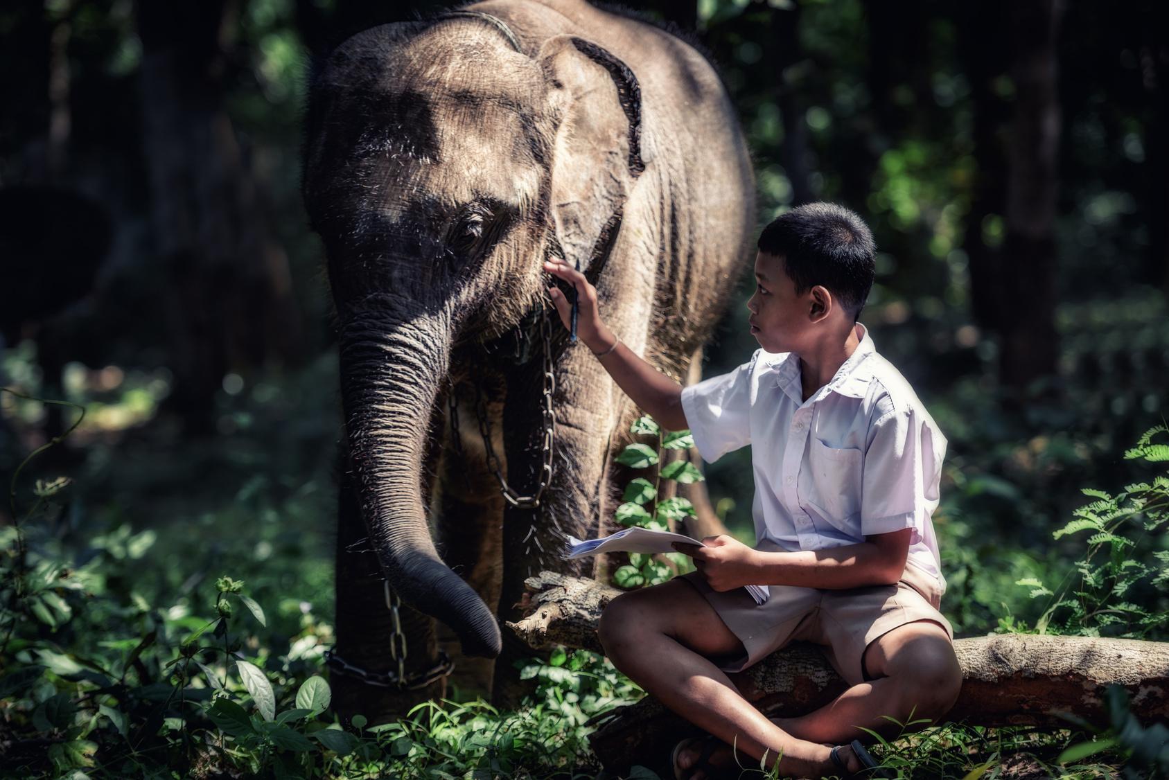 Słonie w Chang Chill Biuro podróży Goforworld by Kuźniar