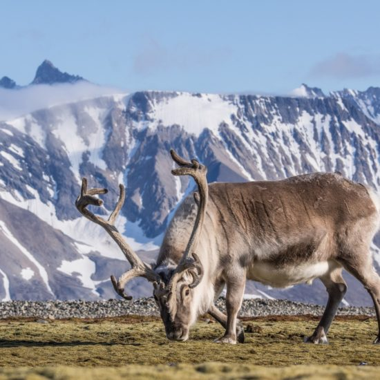 Grenlandia Biuro podróży Goforworld by Kuźniar