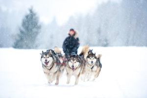 Pieskie życie na Grenlandii Biuro podróży Goforworld by Kuźniar