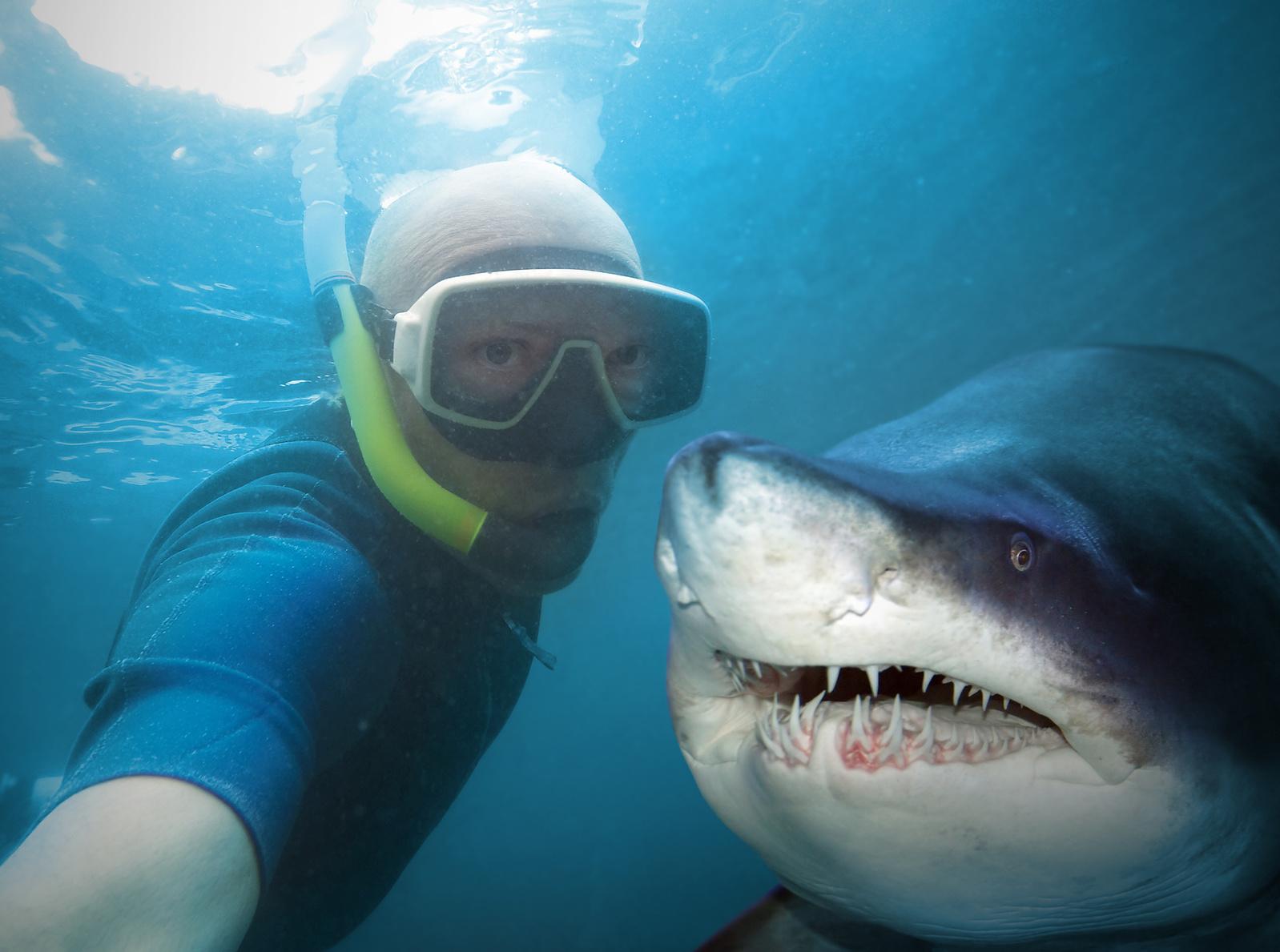Długowieczne rekiny Biuro podróży Goforworld by Kuźniar
