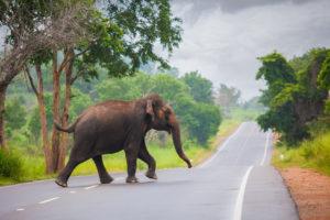 Miłość słonia Biuro podróży Goforworld by Kuźniar