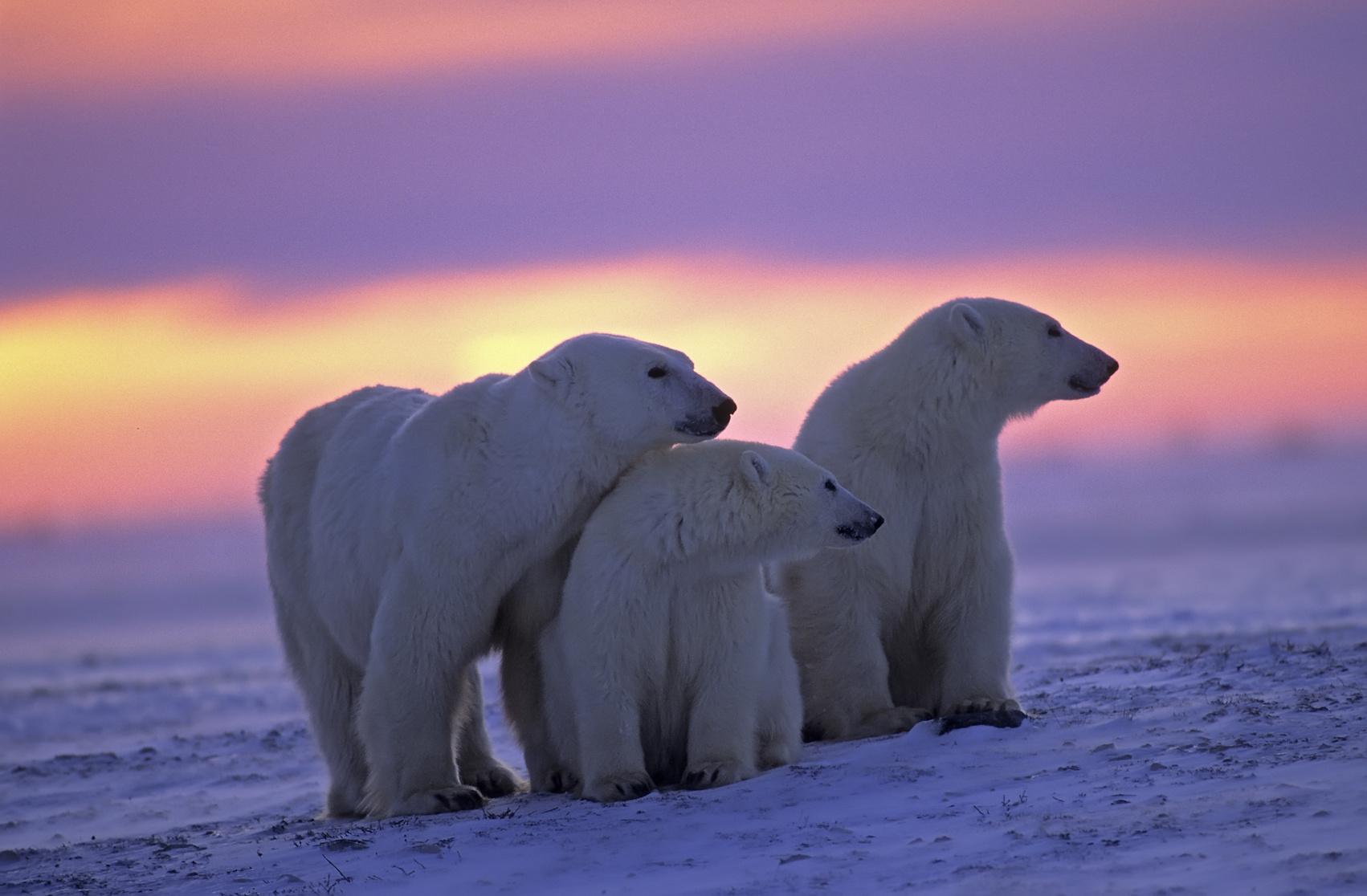 Duchy Arktyki Biuro podróży Goforworld by Kuźniar