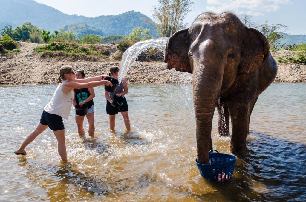 chiang-mai-elephant-nature-park (Copy)
