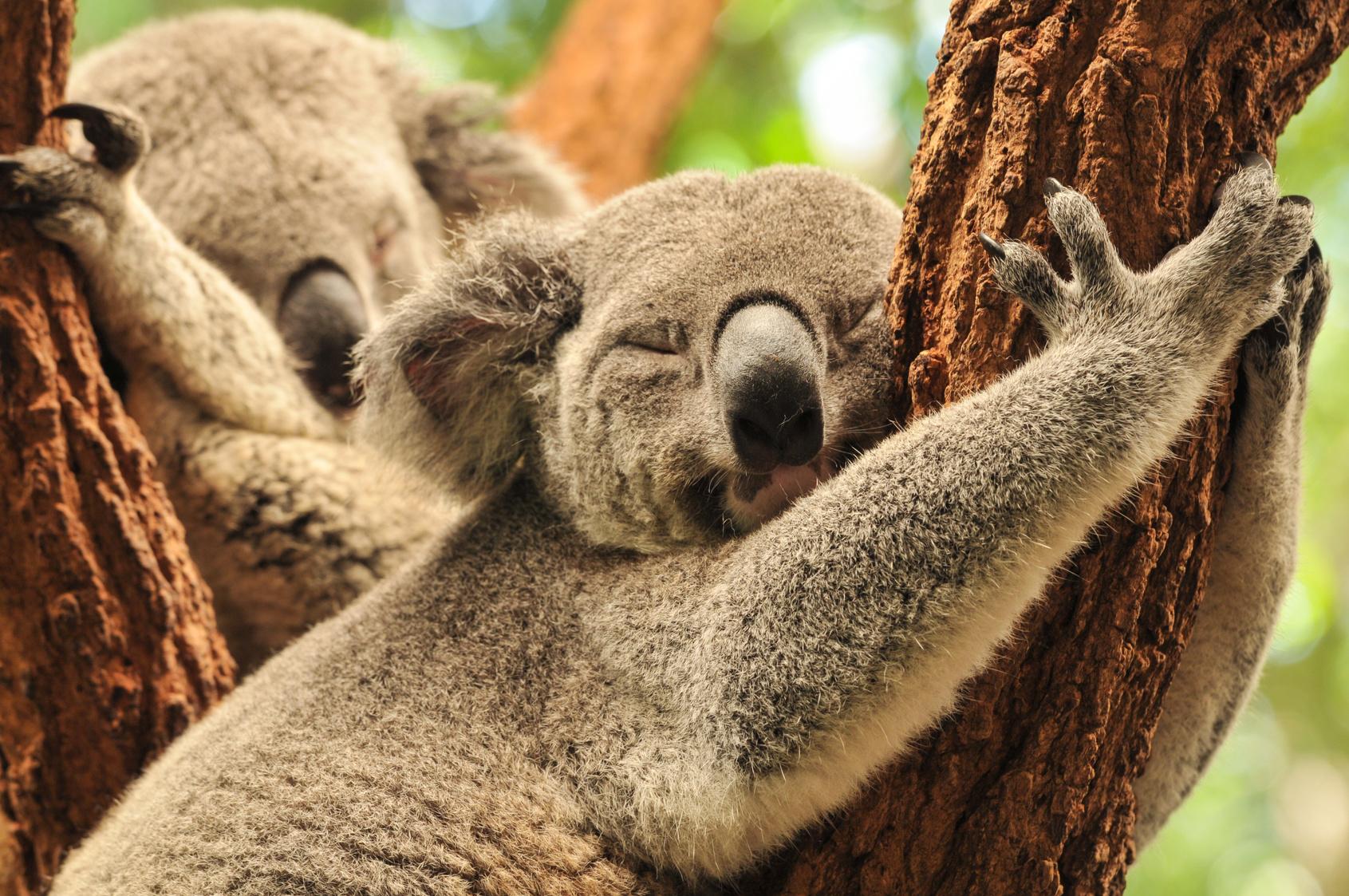 Queensland   #gofordream Biuro podróży Goforworld by Kuźniar