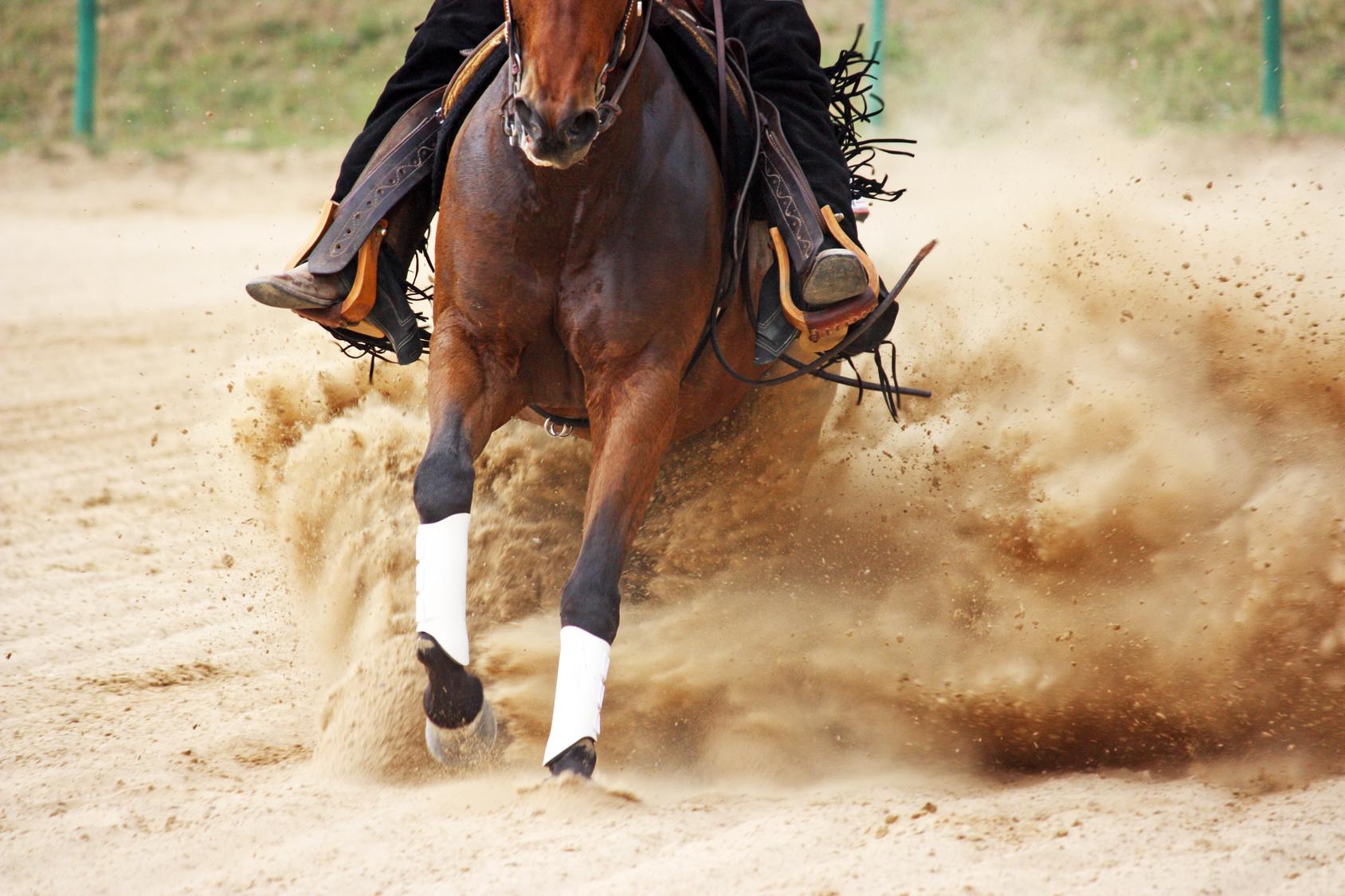 Rodeo po meksykańsku Biuro podróży Goforworld by Kuźniar