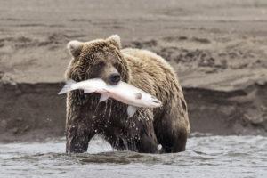 Alaska | GALERIA Biuro podróży Goforworld by Kuźniar