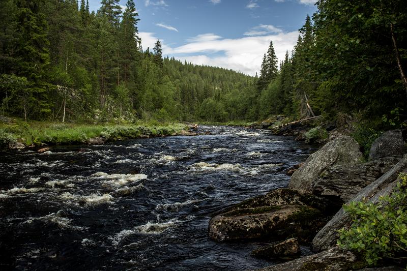Norwegia_2 (Copy)