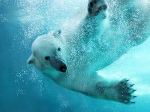 Polarne życie LIVE Biuro podróży Goforworld by Kuźniar