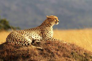 Safari LIVE Biuro podróży Goforworld by Kuźniar