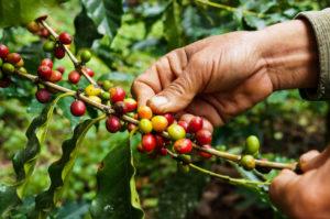 Kawa z Rwandy to historia Biuro podróży Goforworld by Kuźniar