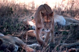Ochrona przyrody | TOP 6 Biuro podróży Goforworld by Kuźniar