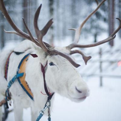 Laponia fińska Biuro podróży Goforworld by Kuźniar