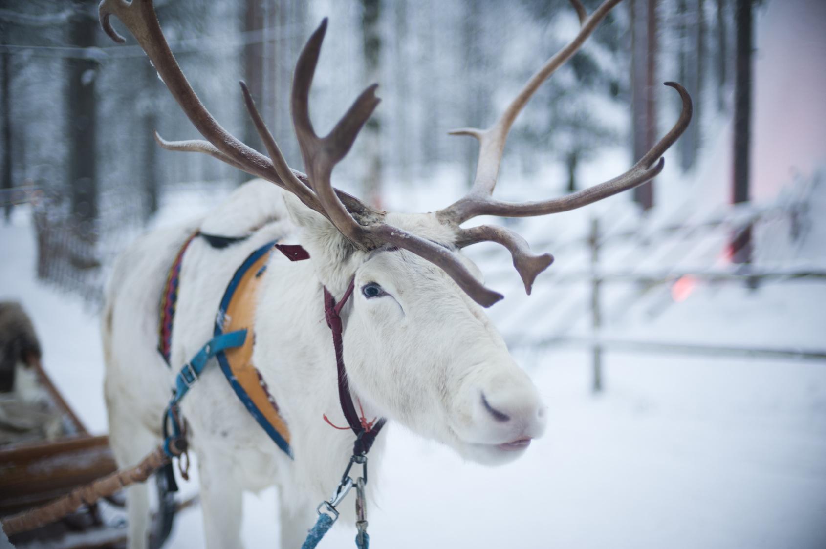 5 powodów, dla których Laponia jest idealna w grudniu! Biuro podróży Goforworld by Kuźniar