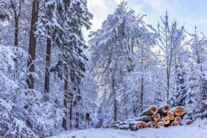 Strażnik śniegu Biuro podróży Goforworld by Kuźniar