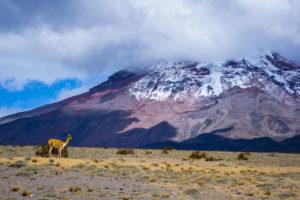 Lodziarz z Ekwadoru Biuro podróży Goforworld by Kuźniar