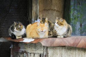 Koty z Omaui Biuro podróży Goforworld by Kuźniar