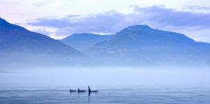 Pływając z orkami Biuro podróży Goforworld by Kuźniar