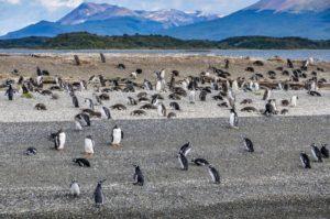 Oko w oko z pingwinem Biuro podróży Goforworld by Kuźniar