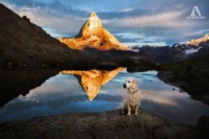 Alpy na czterech łapach Biuro podróży Goforworld by Kuźniar