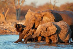 Kość słoniowa mniej popularna Biuro podróży Goforworld by Kuźniar