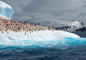 Antarktyda, królestwo życia Biuro podróży Goforworld by Kuźniar