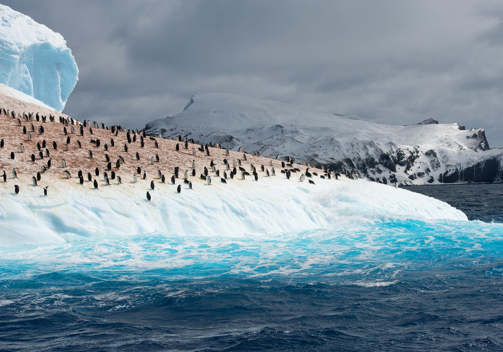 Takiej Antarktydy nie widzieliście! Biuro podróży Goforworld by Kuźniar