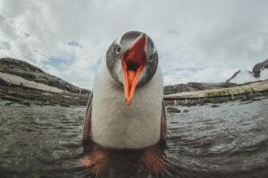 Na dnie Antarktydy Biuro podróży Goforworld by Kuźniar