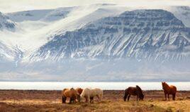 Islandia w 360 stopniach Biuro podróży Goforworld by Kuźniar
