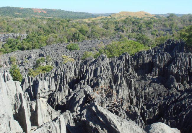 Kamienny las Biuro podróży Goforworld by Kuźniar