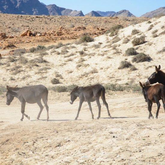 Oman 🇴🇲 Biuro podróży Goforworld by Kuźniar