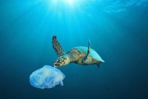 Koniec z plastikiem w Europie! Biuro podróży Goforworld by Kuźniar