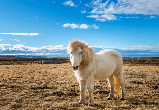 Pojedź z całą rodziną na Islandię! Biuro podróży Goforworld by Kuźniar