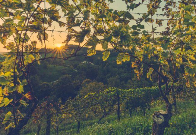 Gruzińskie winobranie Biuro podróży Goforworld by Kuźniar