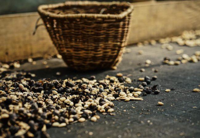 Mrówki z Kolumbii Biuro podróży Goforworld by Kuźniar