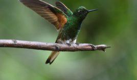 Sanktuarium kolibrów Biuro podróży Goforworld by Kuźniar