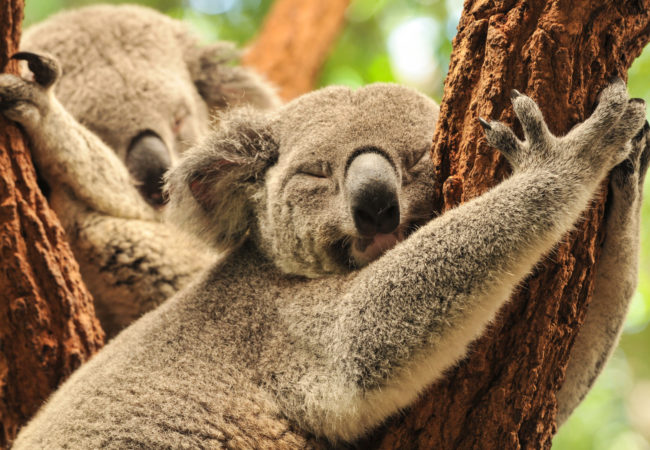 Australia może stracić Biuro podróży Goforworld by Kuźniar