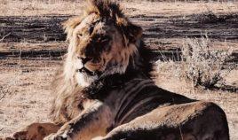 Safari w Erindi Biuro podróży Goforworld by Kuźniar