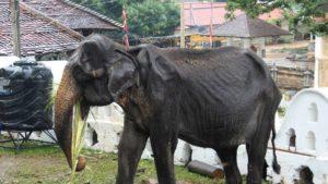 Słonie na rzeź Biuro podróży Goforworld by Kuźniar