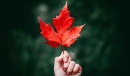 Smażone liście z Japonii Biuro podróży Goforworld by Kuźniar