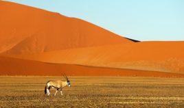 Prastara pustynia i wybrzeże szkieletów Biuro podróży Goforworld by Kuźniar