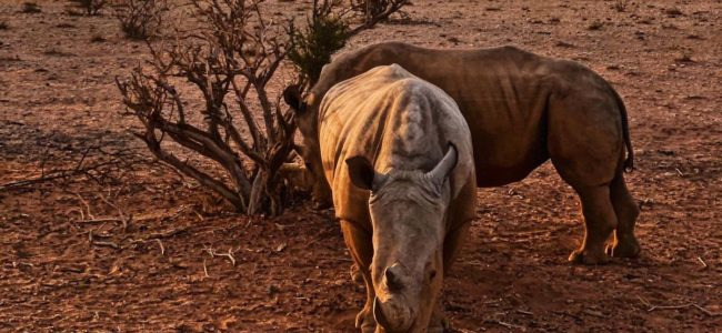 Safari na śniadanie Biuro podróży Goforworld by Kuźniar